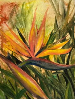 Bird of Paradise - Siraj Hull