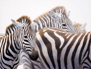 Stripes…and More Stripes - Cary Hunkel
