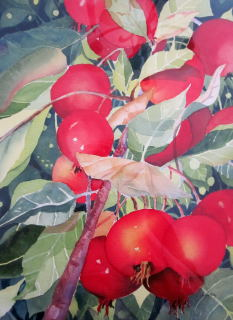 Crabapples - Elizabeth Sawyer Kelly