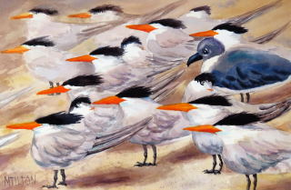 Mary Tilton - It's Not Your Tern